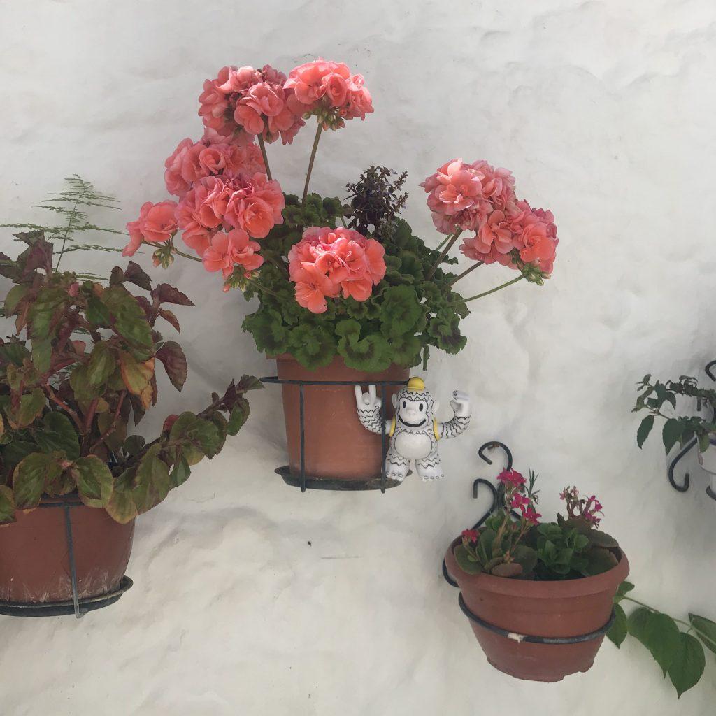 freddie mailchimp flores